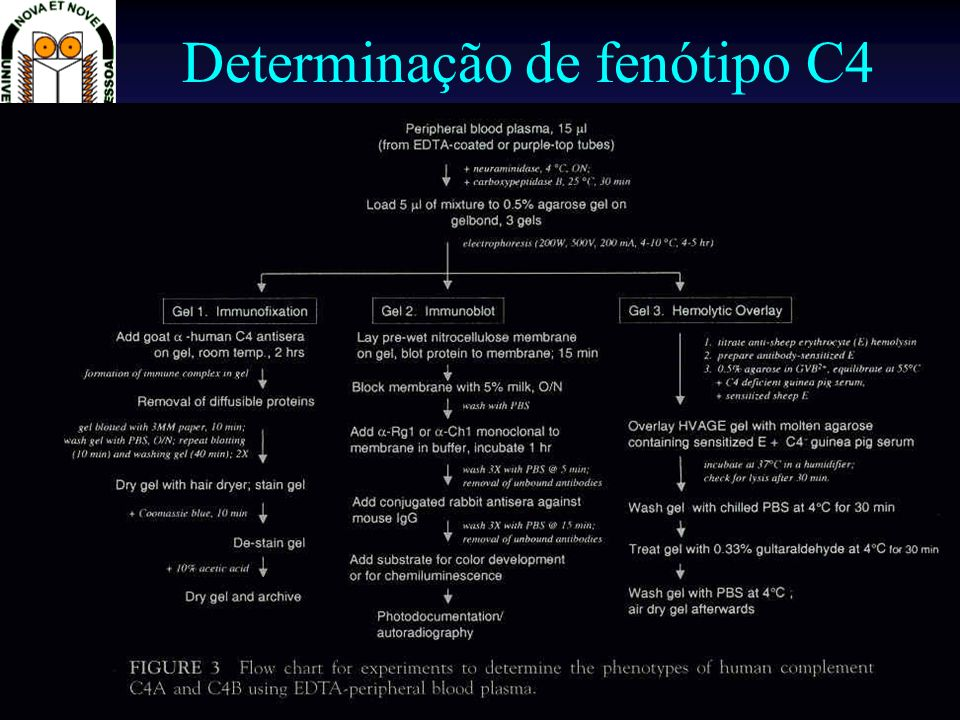 Determinação de fenótipo C4