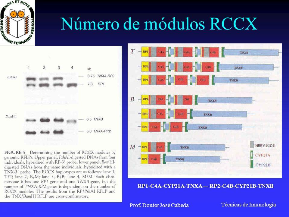 RP1-C4A-CYP21A-TNXA --- RP2-C4B-CYP21B-TNXB