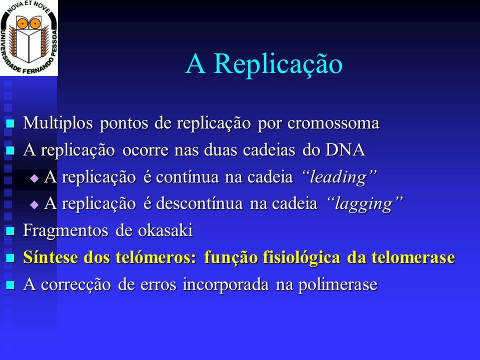 A Replicação Multiplos pontos de replicação por cromossoma