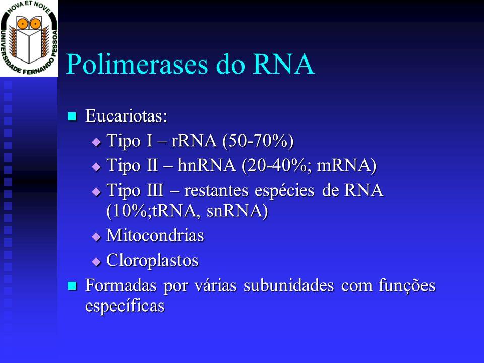 Polimerases do RNA Eucariotas: Tipo I – rRNA (50-70%)
