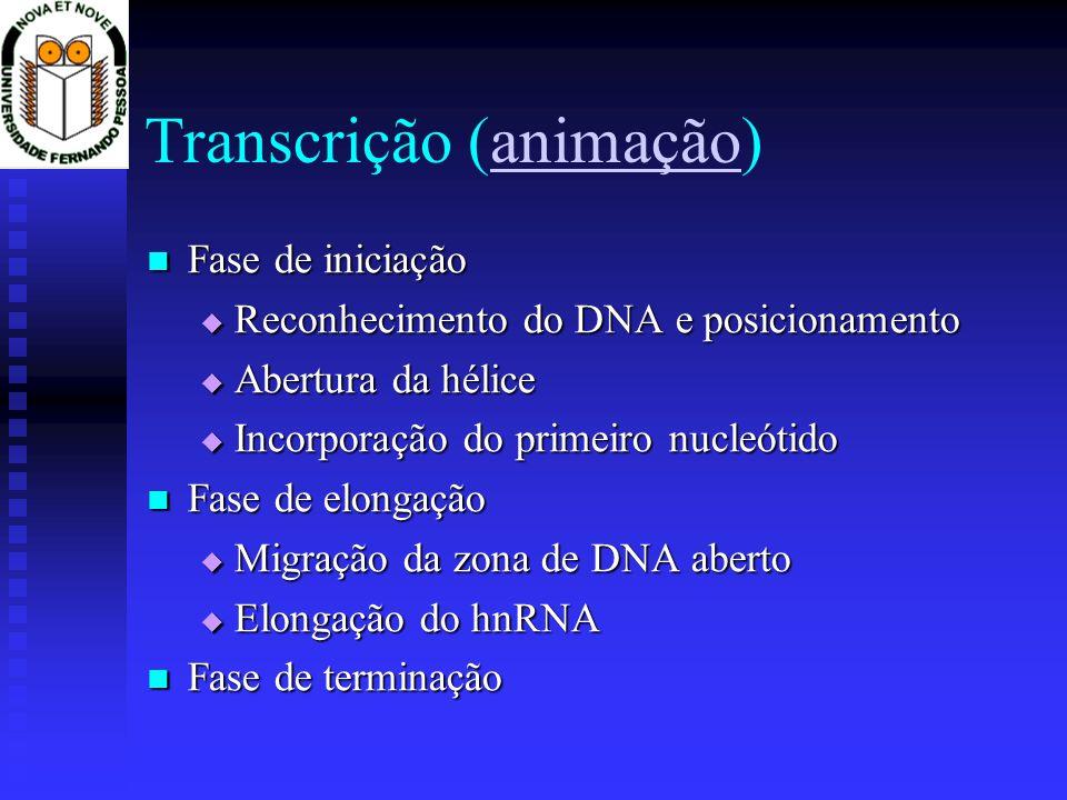 Transcrição (animação)