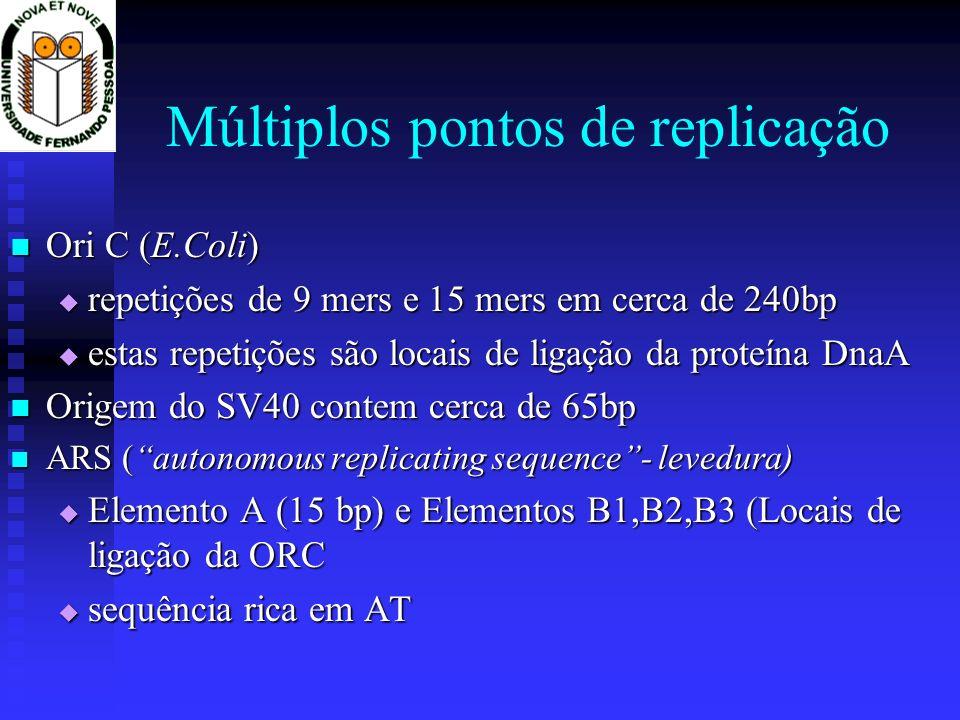 Múltiplos pontos de replicação