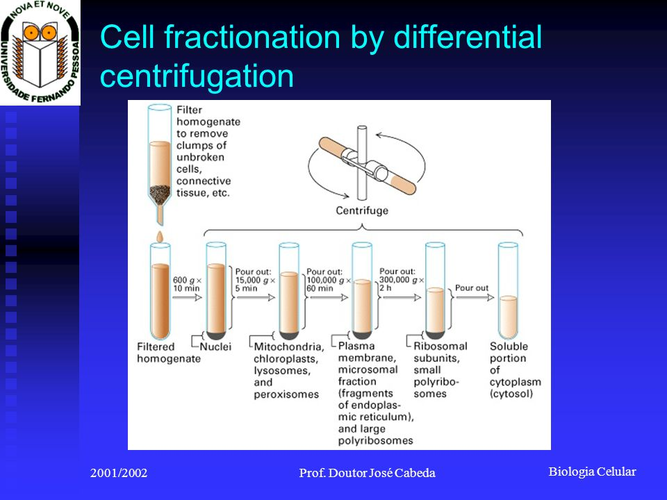 Cell fractionation by differential centrifugation