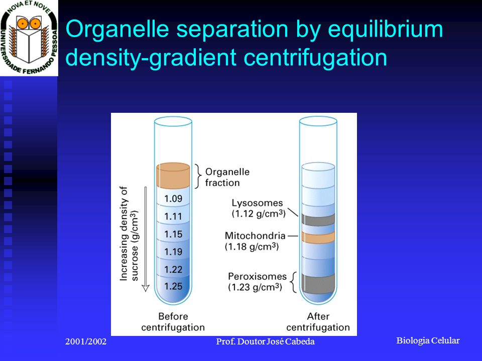 Organelle separation by equilibrium density-gradient centrifugation