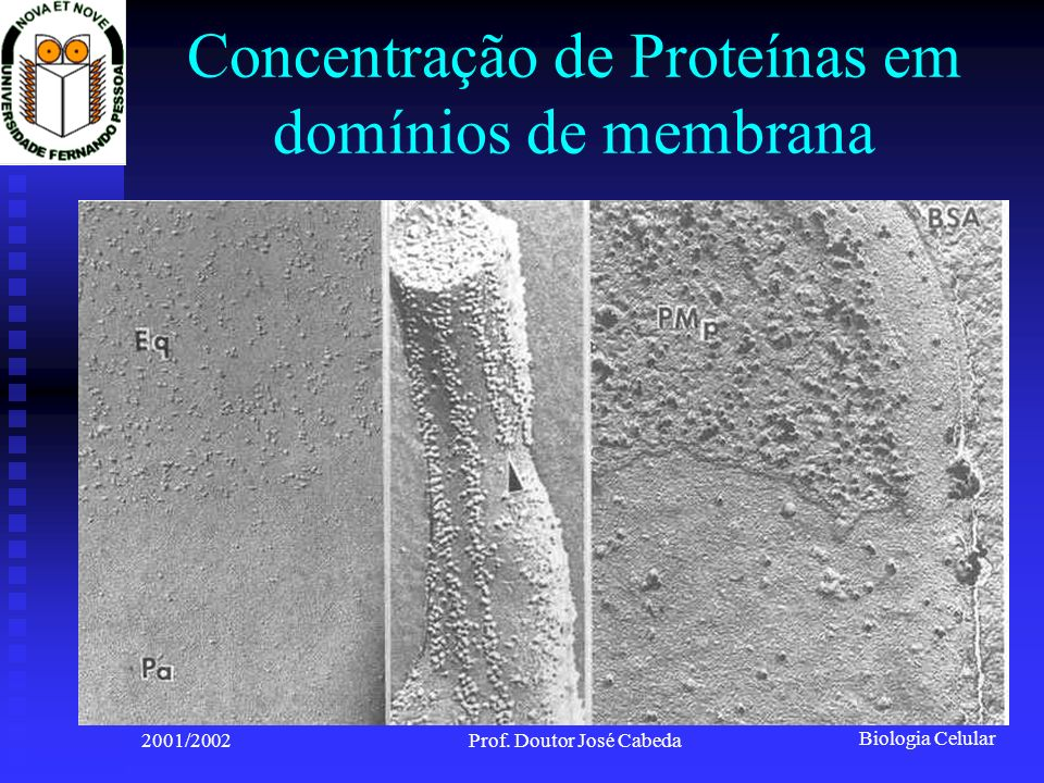 Concentração de Proteínas em domínios de membrana