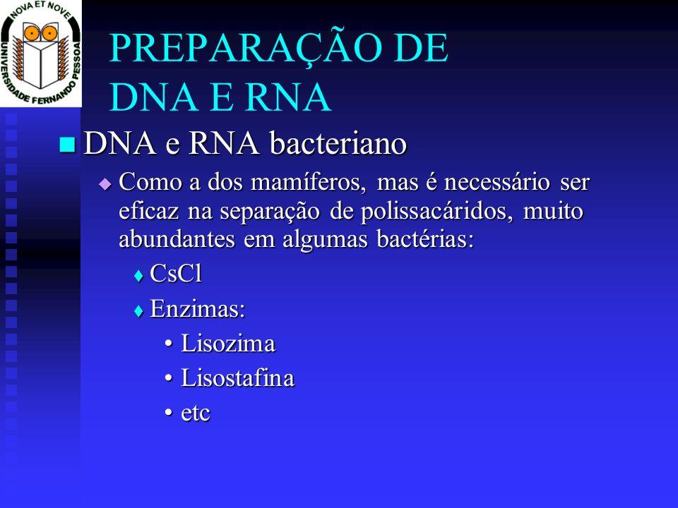 PREPARAÇÃO DE DNA E RNA DNA e RNA bacteriano