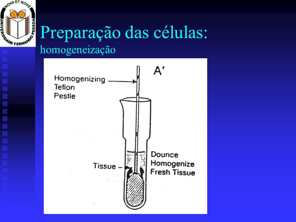Preparação das células: homogeneização