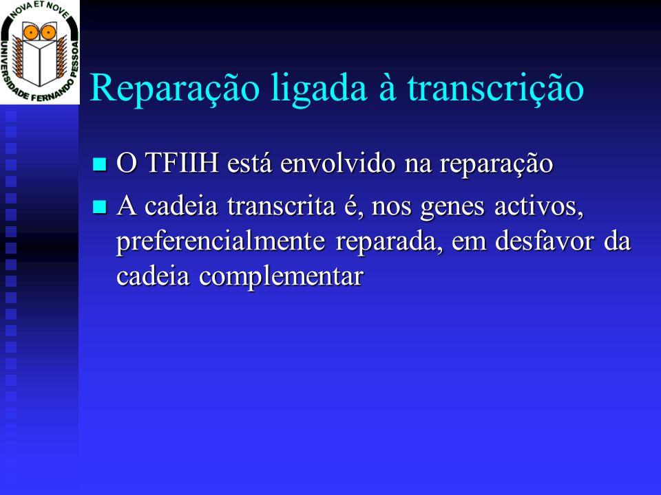 Reparação ligada à transcrição
