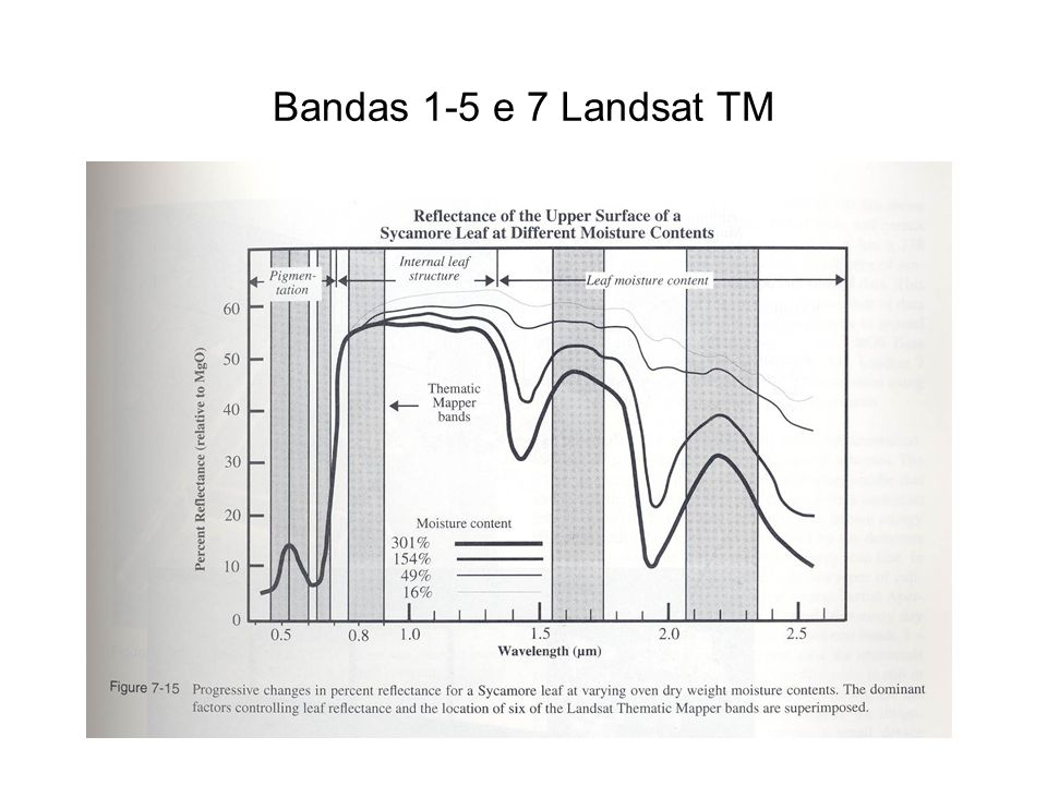 Bandas 1-5 e 7 Landsat TM