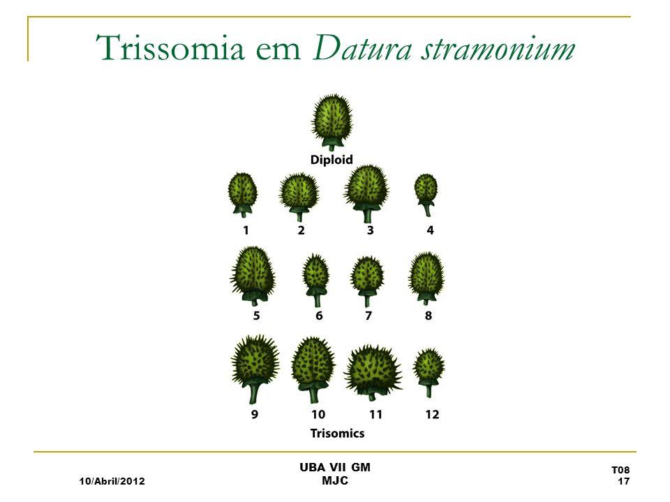 Trissomia em Datura stramonium
