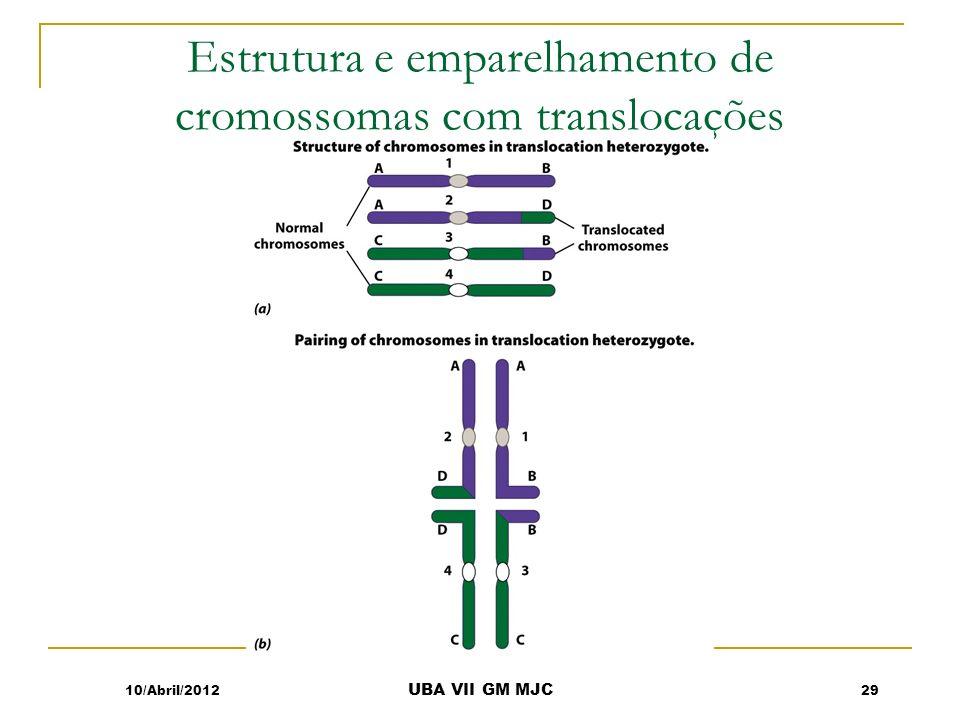 Estrutura e emparelhamento de cromossomas com translocações
