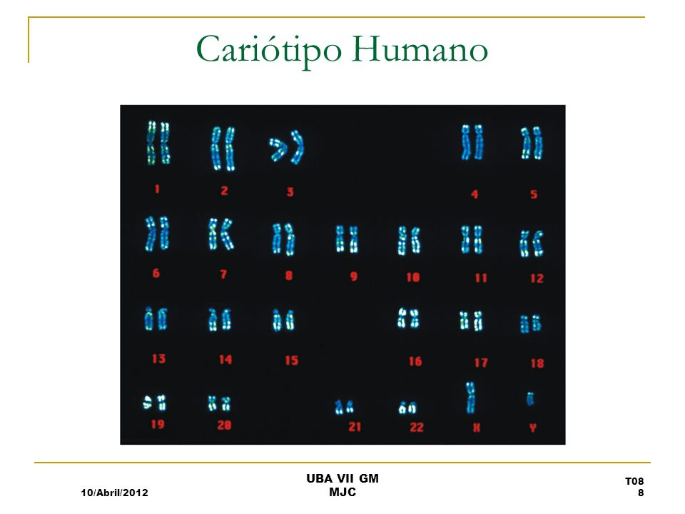 Cariótipo Humano 10/Abril/2012 UBA VII GM MJC
