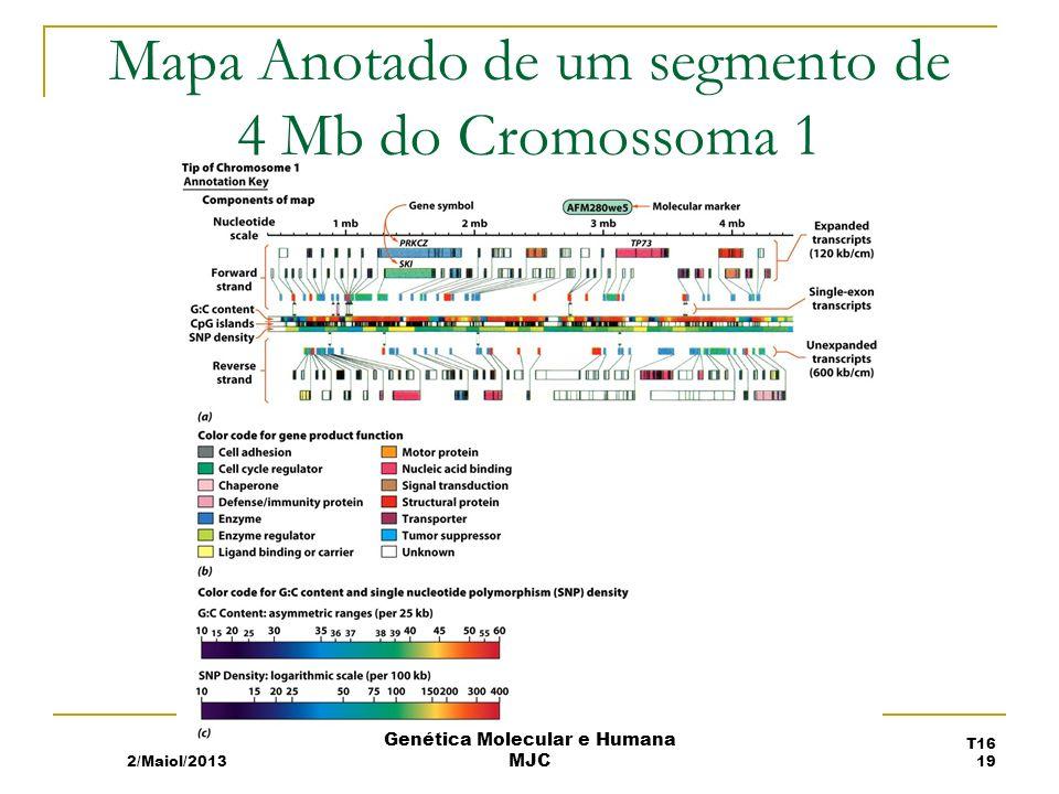 Mapa Anotado de um segmento de 4 Mb do Cromossoma 1
