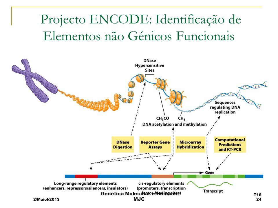 Projecto ENCODE: Identificação de Elementos não Génicos Funcionais