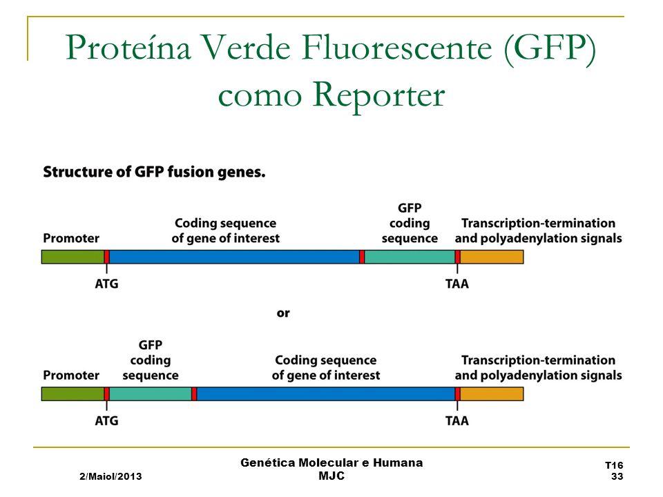 Proteína Verde Fluorescente (GFP) como Reporter