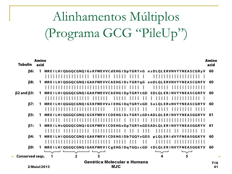 Alinhamentos Múltiplos (Programa GCG PileUp )