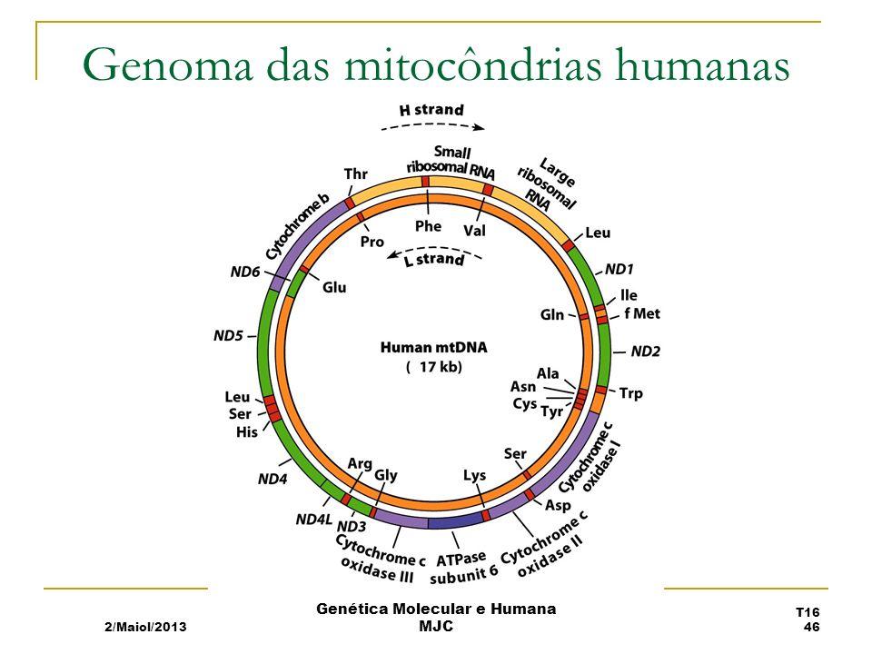 Genoma das mitocôndrias humanas