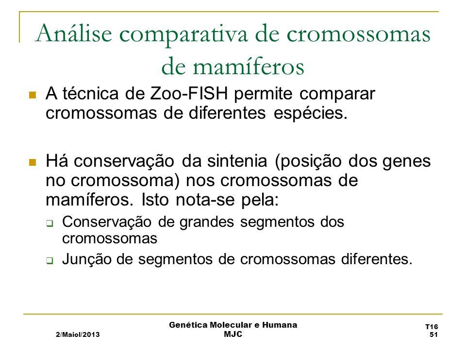 Análise comparativa de cromossomas de mamíferos