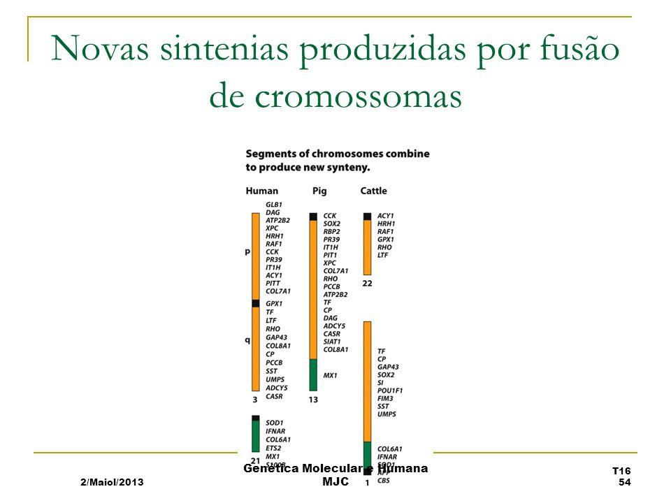 Novas sintenias produzidas por fusão de cromossomas
