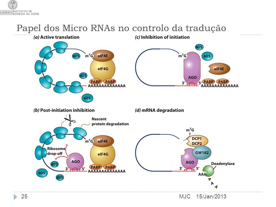Papel dos Micro RNAs no controlo da tradução