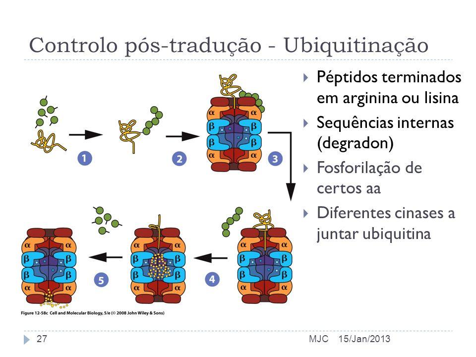Controlo pós-tradução - Ubiquitinação
