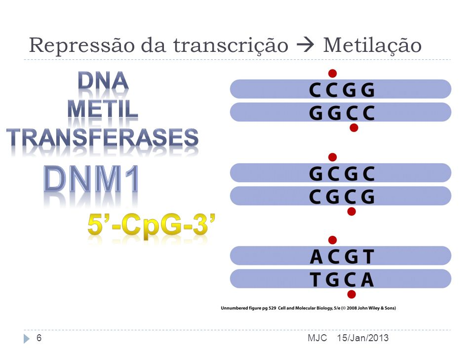 Repressão da transcrição  Metilação
