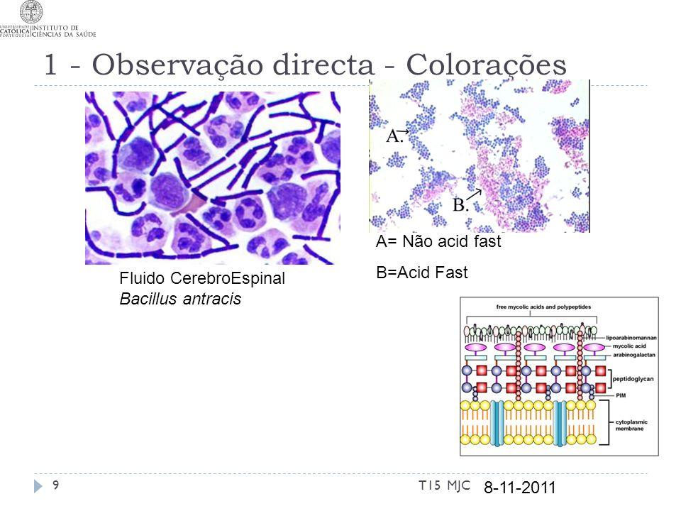 1 - Observação directa - Colorações
