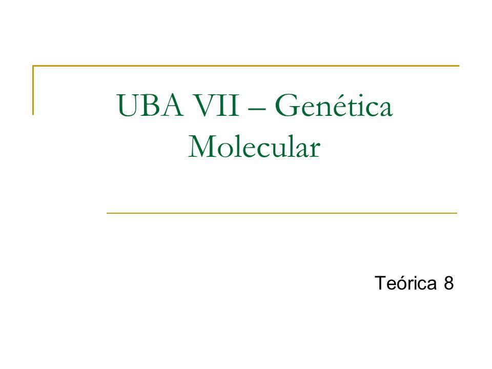UBA VII – Genética Molecular