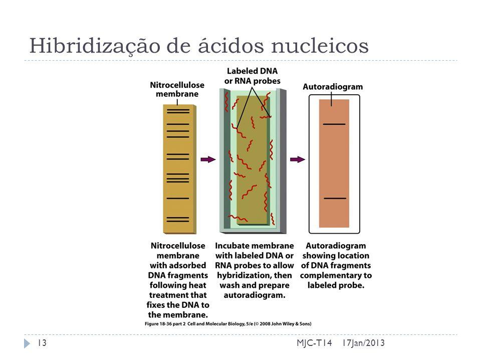 Hibridização de ácidos nucleicos