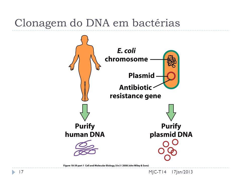 Clonagem do DNA em bactérias