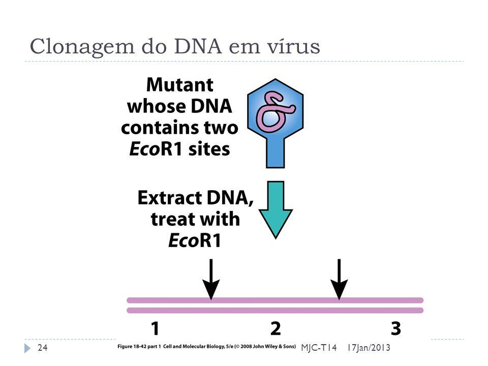 Clonagem do DNA em vírus