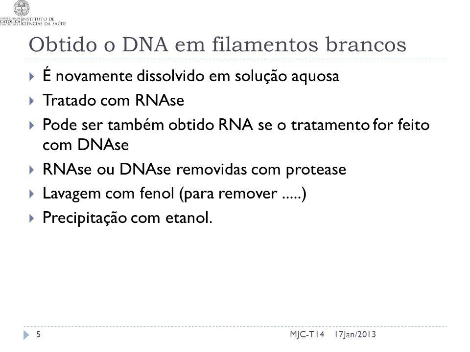 Obtido o DNA em filamentos brancos