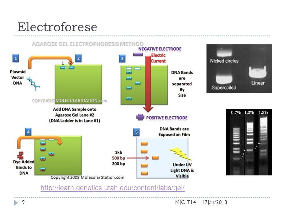 Electroforese http://learn.genetics.utah.edu/content/labs/gel/ MJC-T14