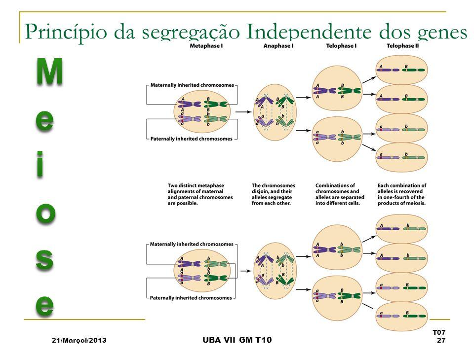 Princípio da segregação Independente dos genes