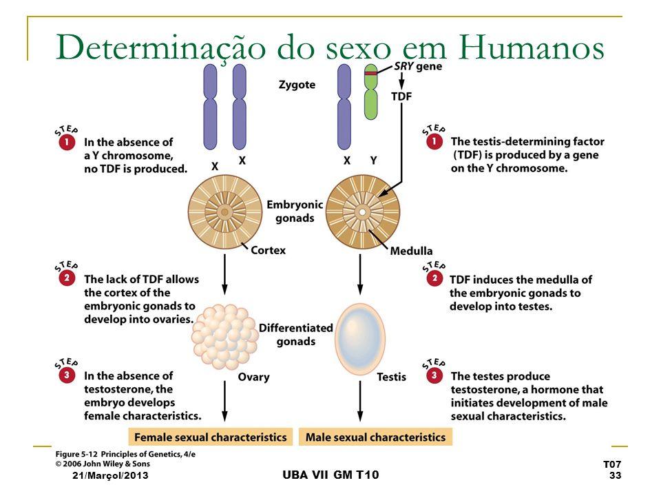 Determinação do sexo em Humanos