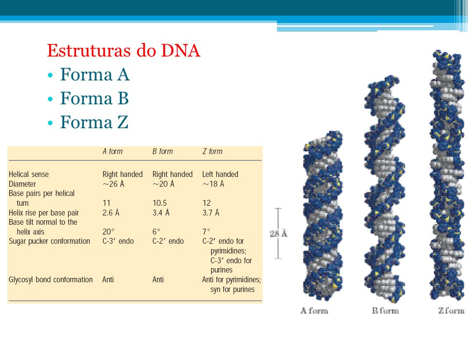 Estruturas do DNA Forma A Forma B Forma Z
