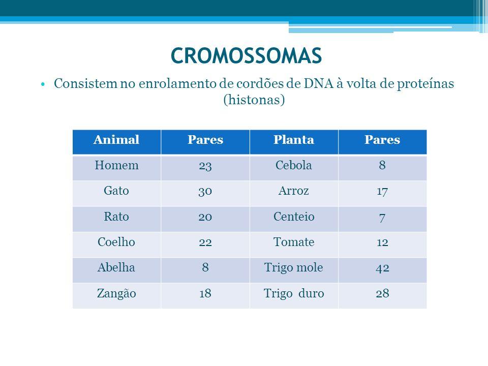 CROMOSSOMAS Consistem no enrolamento de cordões de DNA à volta de proteínas (histonas) Animal. Pares.