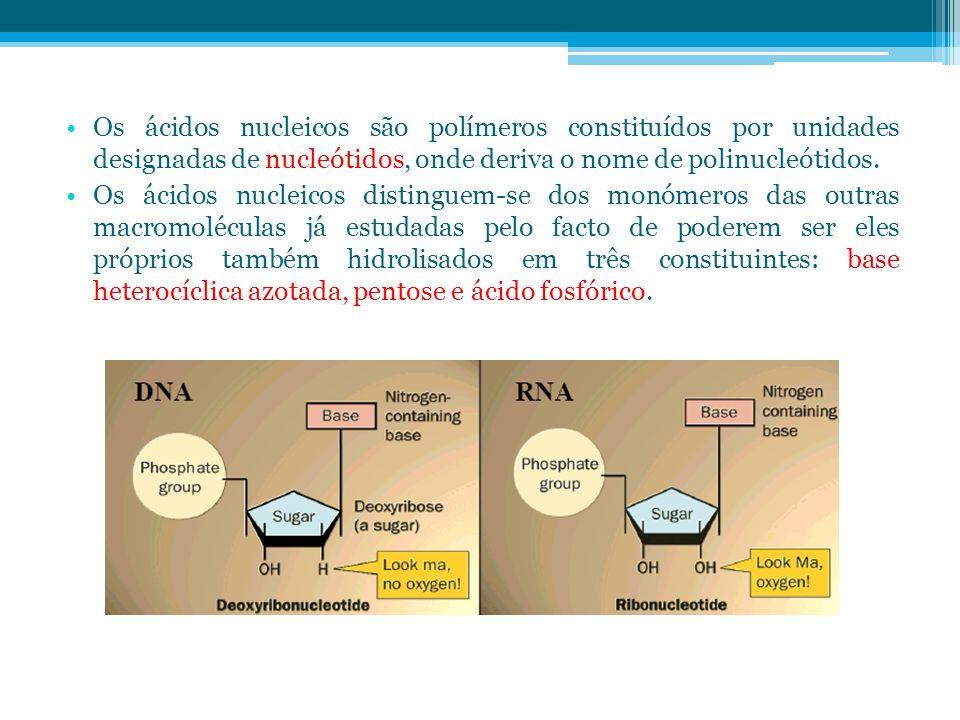 Os ácidos nucleicos são polímeros constituídos por unidades designadas de nucleótidos, onde deriva o nome de polinucleótidos.