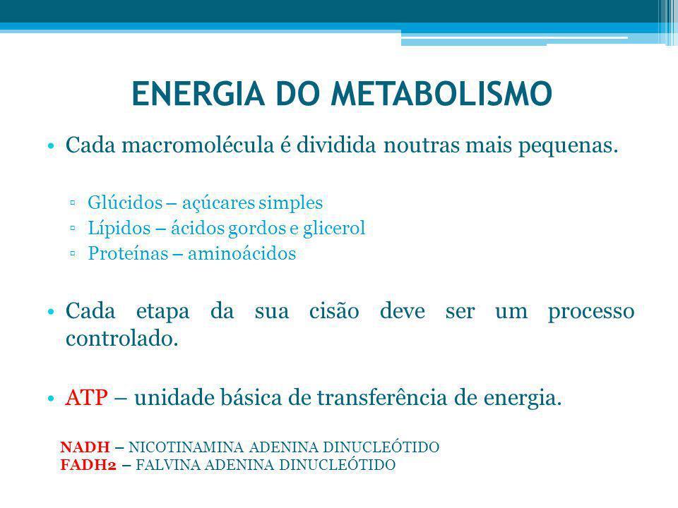 ENERGIA DO METABOLISMO