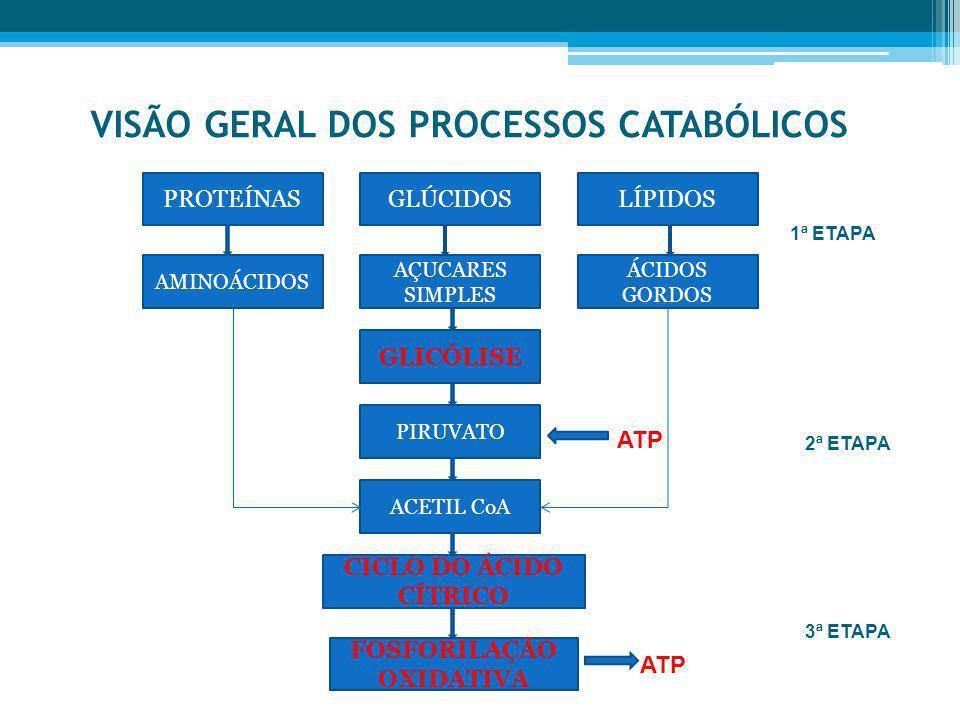 VISÃO GERAL DOS PROCESSOS CATABÓLICOS