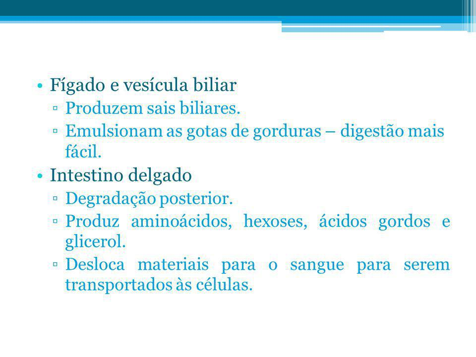 Fígado e vesícula biliar