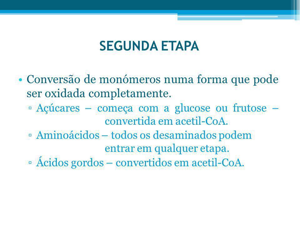 SEGUNDA ETAPA Conversão de monómeros numa forma que pode ser oxidada completamente.