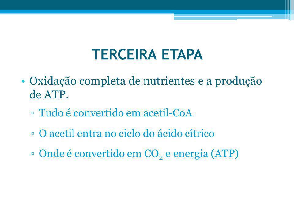 TERCEIRA ETAPA Oxidação completa de nutrientes e a produção de ATP.