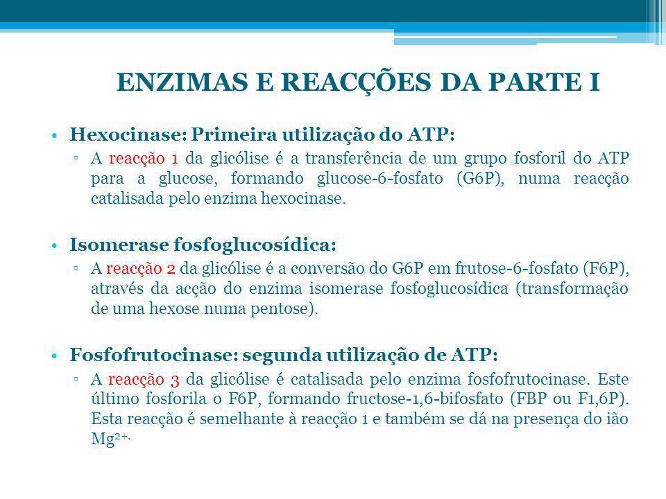 ENZIMAS E REACÇÕES DA PARTE I