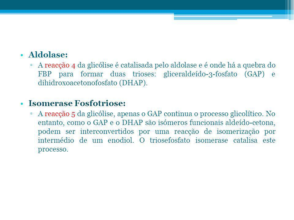 Isomerase Fosfotriose: