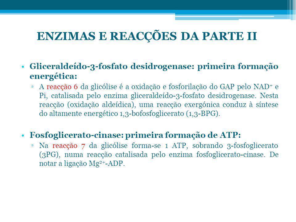 ENZIMAS E REACÇÕES DA PARTE II
