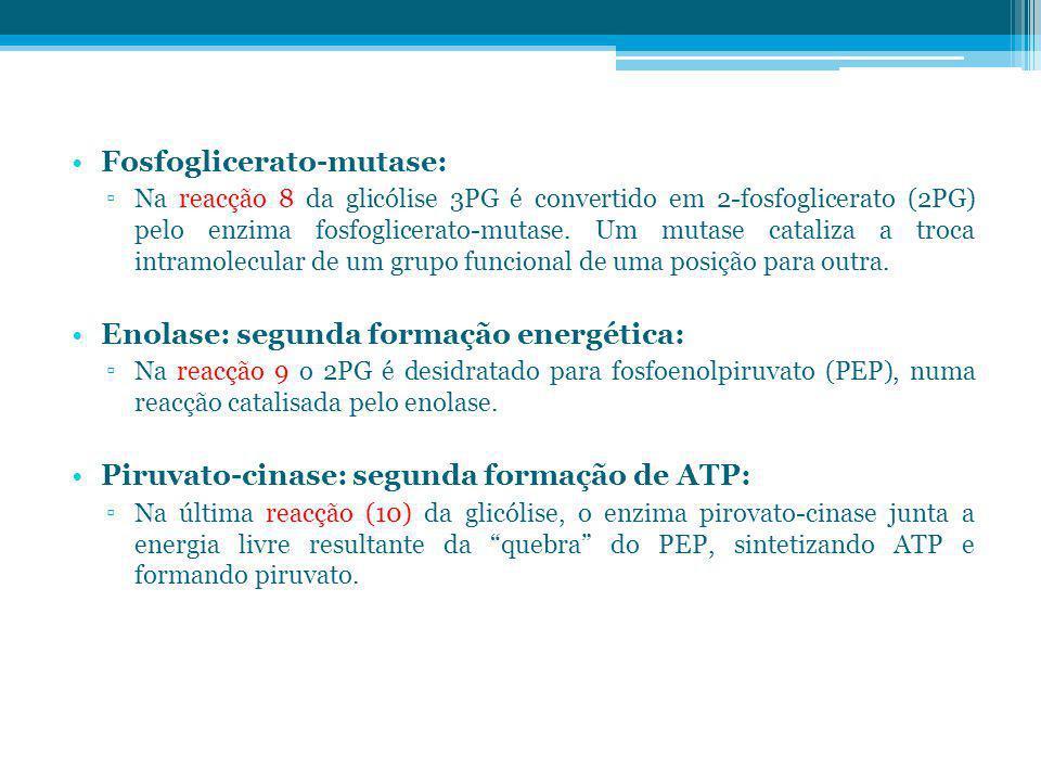 Fosfoglicerato-mutase: