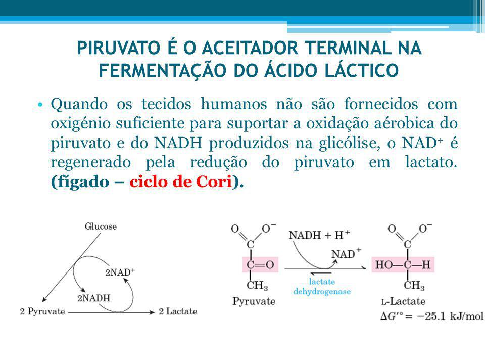 PIRUVATO É O ACEITADOR TERMINAL NA FERMENTAÇÃO DO ÁCIDO LÁCTICO
