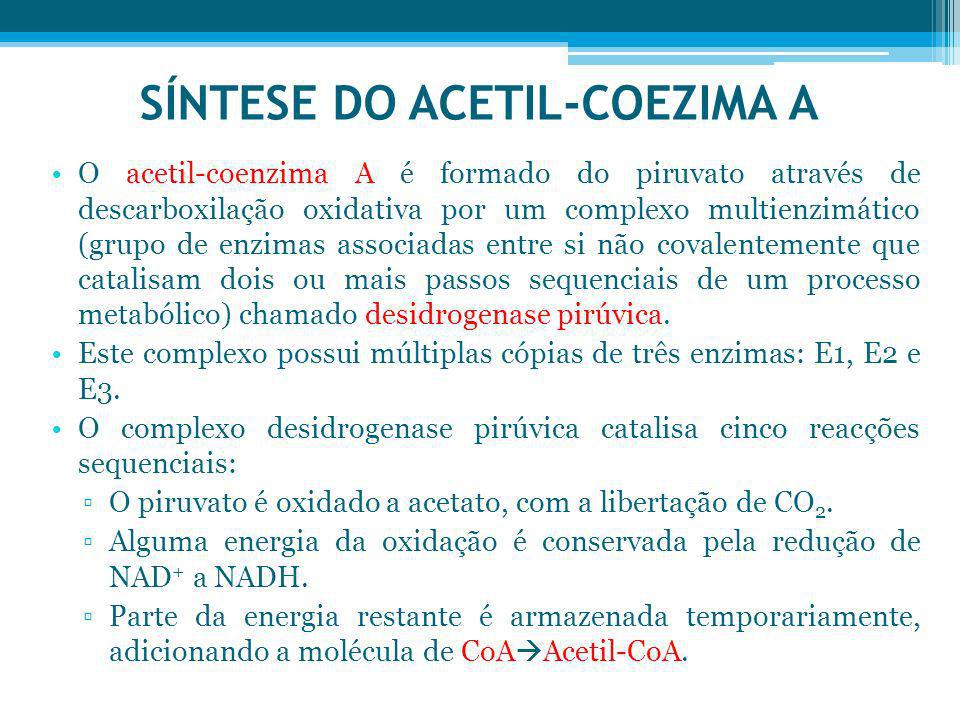 SÍNTESE DO ACETIL-COEZIMA A