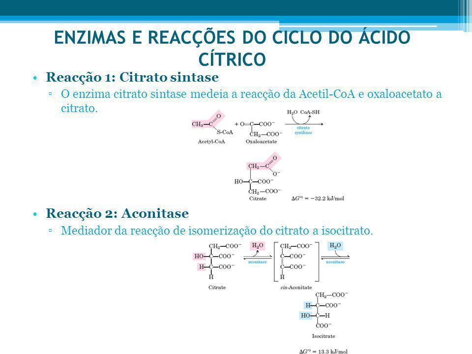 ENZIMAS E REACÇÕES DO CICLO DO ÁCIDO CÍTRICO